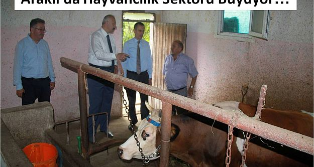 Araklı#039;da Hayvancılık Sektörü Büyüyor
