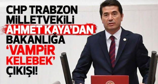 CHP Trabzon Milletvekili Kaya'dan bakanlığa vampir kelebek çıkışı!