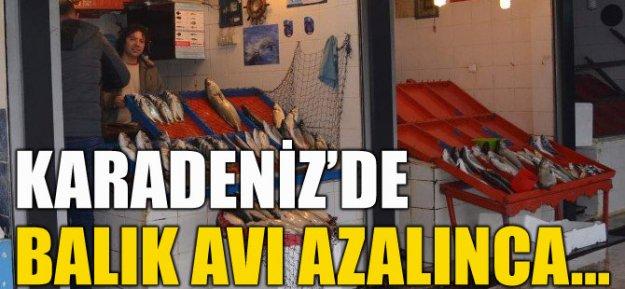 Karadenizde balık azalınca vatandaş kültür balığına yöneldi...