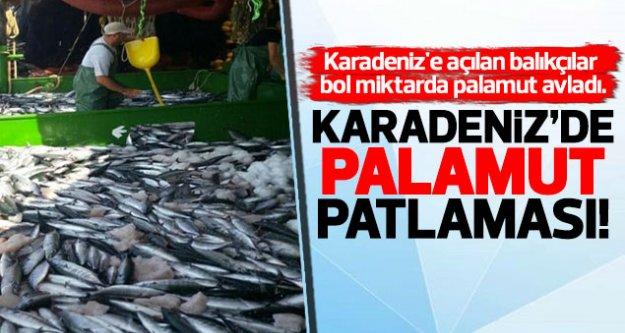 Karadeniz'de palamut bolluğu