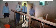 Araklı'da Hayvancılık Sektörü Büyüyor