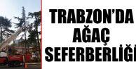 Trabzon Büyükşehir Belediyesi il genelinde ağaç seferberliği başlattı.