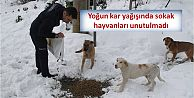 Yoğun kar yağışında sokak hayvanları unutulmadı