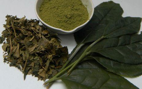 Yeşil çay hafızayı da güçlendiriyor